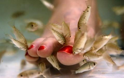 """Kangalo žuvelių atliekama procedūra – natūrali """"pedikiūro"""" rūšis dar vadinama """"Turkišku pedikiūru"""". Procedūra kilusi iš saulėtosios Turkijos, labai greita išplito Azijoje ir yra labai populiari visame pasaulyje. Susipažinkime: Kangalo žuvelės, […]"""