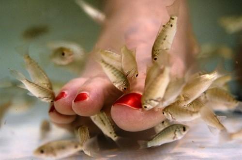 AP Fish Pedicures